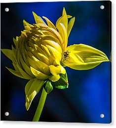 Yellow Camo Acrylic Print