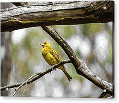 Yellow Canary Acrylic Print