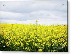 Acrylic Print featuring the photograph Yellow Canopies by Ivy Ho