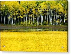 Yellow Acrylic Print by Chad Dutson