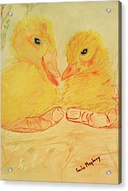 Yellow Chicks Acrylic Print by Paula Maybery