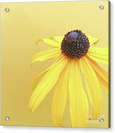 Acrylic Print featuring the photograph Yellow by Cindy Garber Iverson