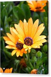 Yellow Colored Petals Acrylic Print