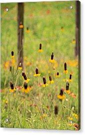 Yellow Cone Flower Acrylic Print