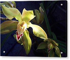 Yellow Cymbidium And Shadows Acrylic Print by Jean Booth