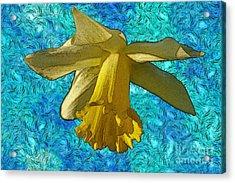 Yellow Daffodil 3 Acrylic Print by Jean Bernard Roussilhe