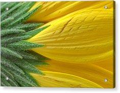 Yellow Daisy Macro Acrylic Print by Nicolas Raymond