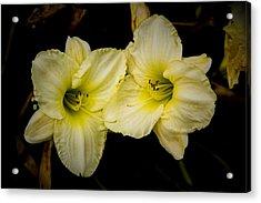 Yellow Day Lilies Acrylic Print