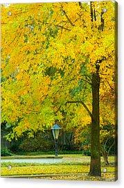 Yellow Drapes Acrylic Print