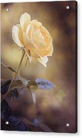 Yellow Dream Acrylic Print