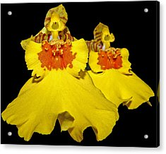 Acrylic Print featuring the photograph Yellow Dresses by Judy Vincent