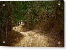 Yellow Dust Road Acrylic Print