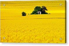 Yellow Acrylic Print by Evgeni Dinev