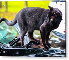 Acrylic Print featuring the photograph Yellow Eyed Cat by Madeline Ellis
