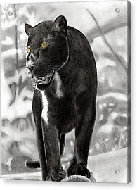 Yellow Eyes Acrylic Print