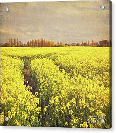 Yellow Field Acrylic Print by Lyn Randle