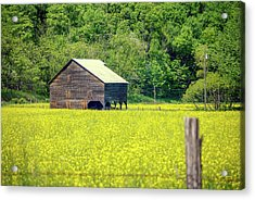 Yellow Field Rustic Shed Acrylic Print