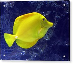 Acrylic Print featuring the relief Yellow Fish by Suhas Tavkar