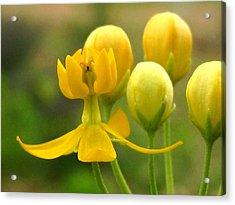 Yellow Flick Acrylic Print by Diana Moya