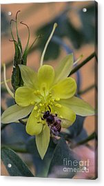 Yellow Flower 5 Acrylic Print