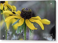 Yellow Flower 6 Acrylic Print