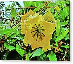 Yellow Flower. Acrylic Print