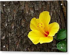 Yellow Flower Acrylic Print by Carlos Caetano