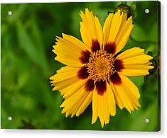 Yellow Flower Acrylic Print by Edward Myers