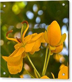 Yellow Flower Acrylic Print by Lori Kesten