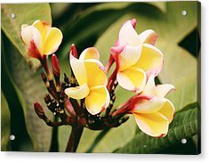 Acrylic Print featuring the photograph Yellow Flower by Martina Uras