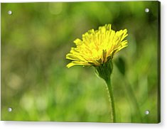 Acrylic Print featuring the photograph Yellow Flower by Nikos Stavrakas