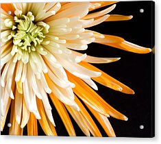Yellow Flower On Black Acrylic Print