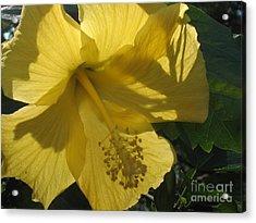 Yellow Flower Acrylic Print by Paula Deutz