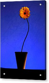 Acrylic Print featuring the photograph Yellow Flower by Riana Van Staden