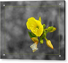 Yellow Flower Acrylic Print by Robert Clayton