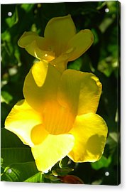 Yellow Flowers Acrylic Print by Alyona Firth
