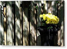Yellow Flowers In A Black Flower Pot 2wc2 Acrylic Print