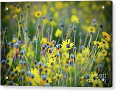 Acrylic Print featuring the photograph Yellow Flowers by Kelly Wade