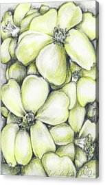 Yellow Flowers Pencil Acrylic Print