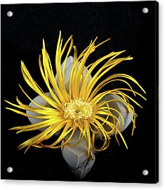 Acrylic Print featuring the photograph Yellow Follower  by Catherine Lau