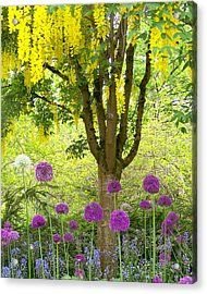 Yellow Hanging Hydrangea Tree Acrylic Print by Elizabeth Thomas