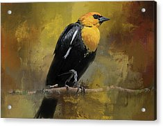 Acrylic Print featuring the photograph Yellow-headed Blackbird by Donna Kennedy