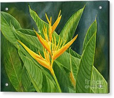 Yellow Heliconia Paradise With Leaves Acrylic Print by Sharon Freeman