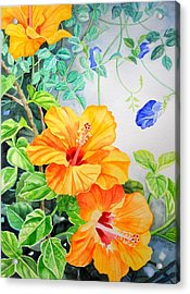 Yellow Hibiscus And Blue Clitoria Acrylic Print