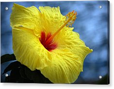 Acrylic Print featuring the photograph Yellow Hibiscus by Debbie Karnes