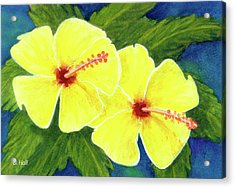 Yellow Hibiscus Flower #292 Acrylic Print by Donald k Hall