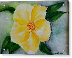 Yellow Hibiscus Acrylic Print by Jamie Frier