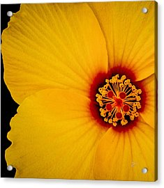Acrylic Print featuring the photograph Yellow Hibiscus Squared by TK Goforth
