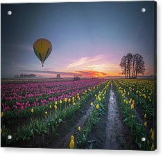 Acrylic Print featuring the photograph Yellow Hot Air Balloon Over Tulip Field In The Morning Tranquili by William Lee