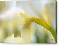 Yellow Iris 1 Acrylic Print